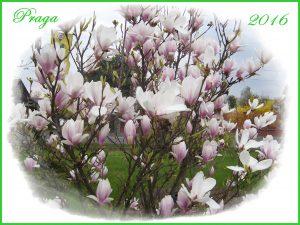 wiosna 001